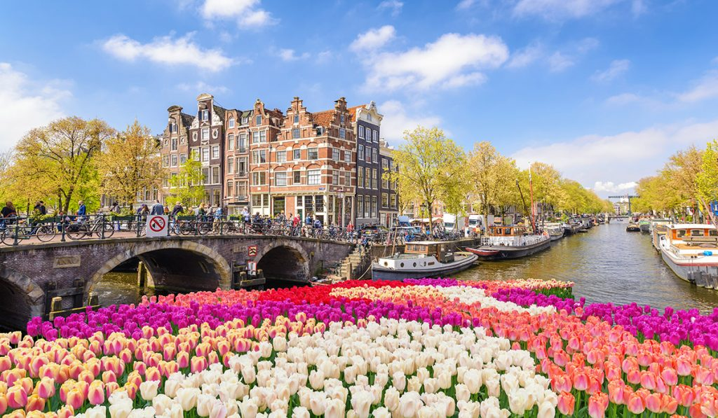 Tulips, a historical symbol of the city