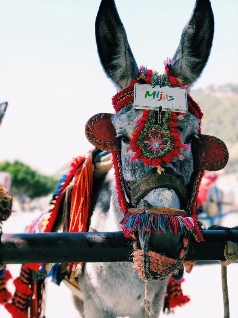 llittle donkey